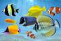 Internationaler Tag zur Erhaltung der Artenvielfalt 2020 - 22.05.2020