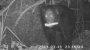 Schimpansen plündern nachts Maisfeld - Der Videobeweis - SPIEGEL ONLINE