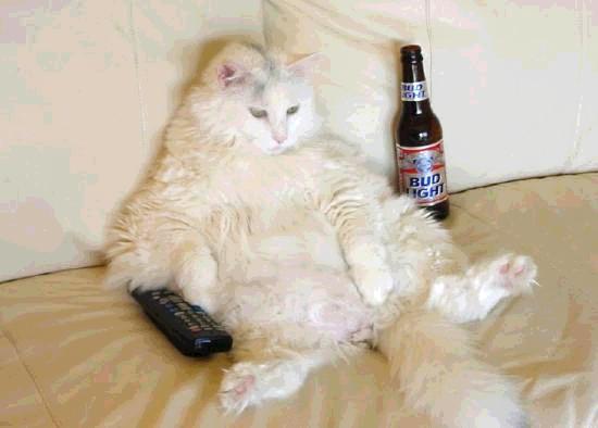 cat-tv.jpg