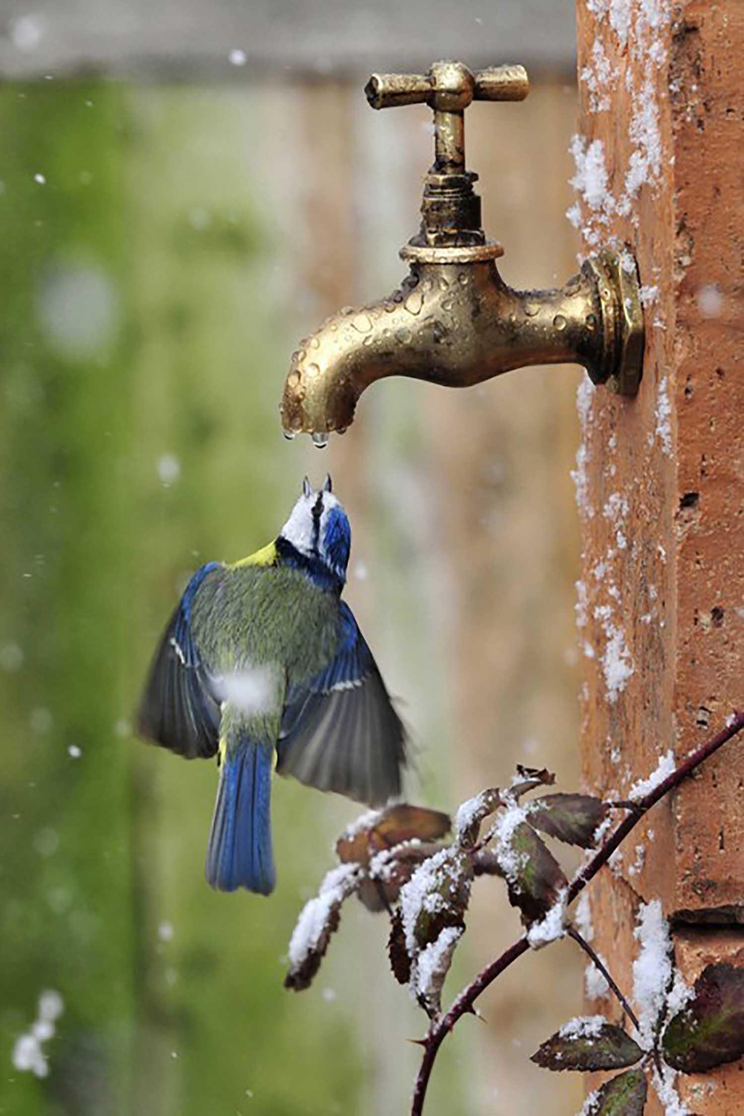 durstiger_vogel.jpg