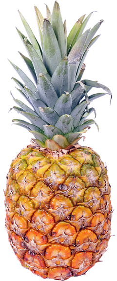 pineapple-1443385_960_720.png