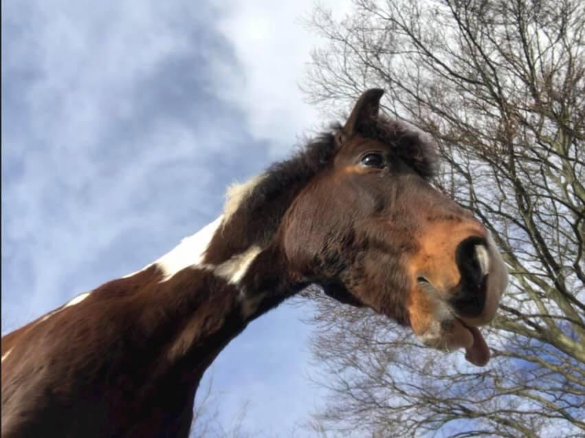 pferd_von_unten.jpg