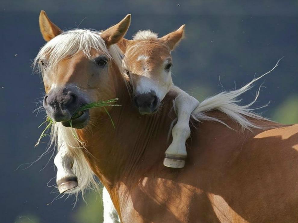 give-your-mom-a-hug-pony-wants-piggyback-ride-....jpg