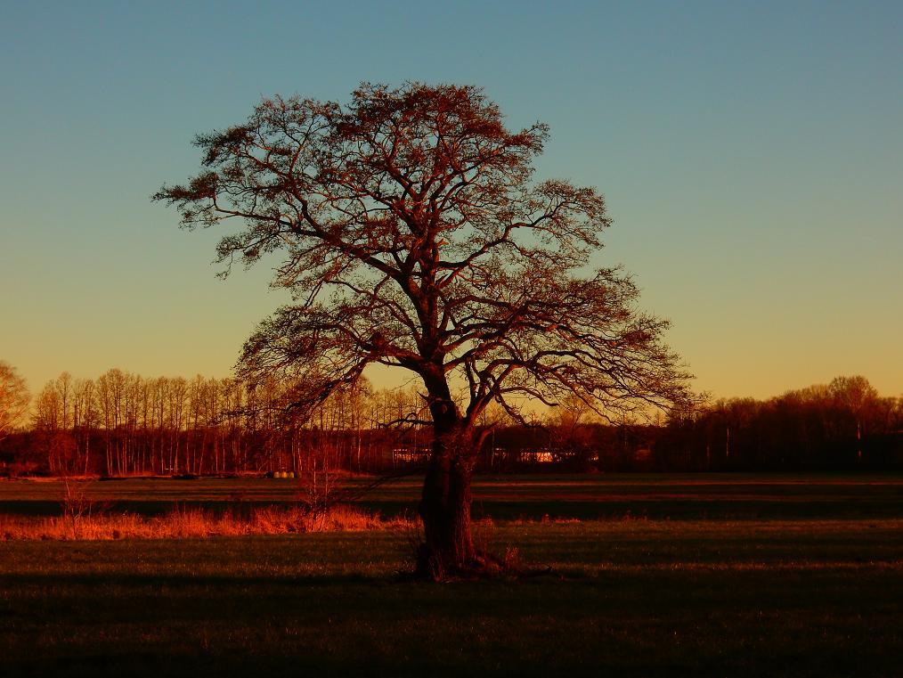 tree77.jpg