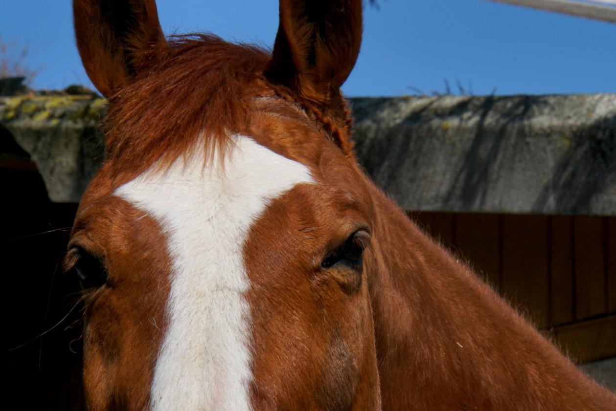 pferdemodel.jpg