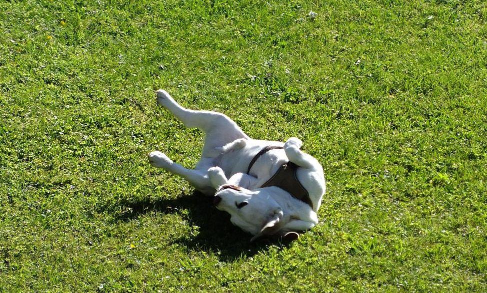 hund02.jpg