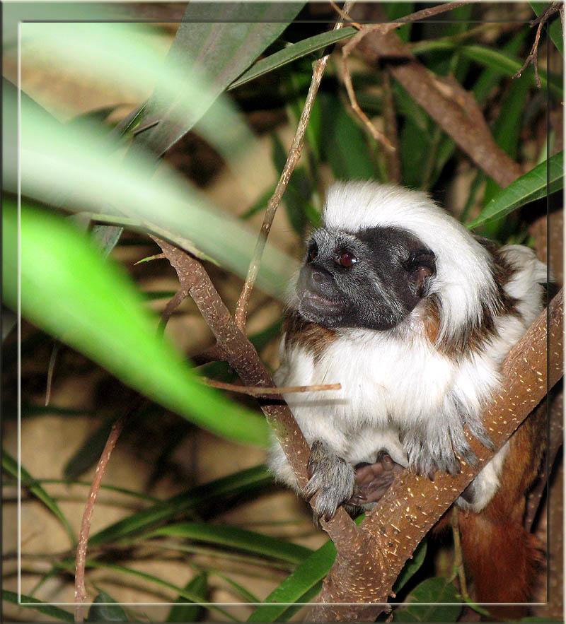 lemuren_03_duisburger_zoo.jpg