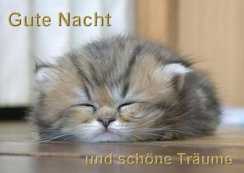 gute_nacht_und_sch__ne_tr__ume_katze__.jpg