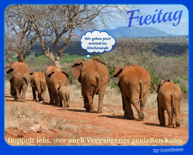 elefanten_we.jpg
