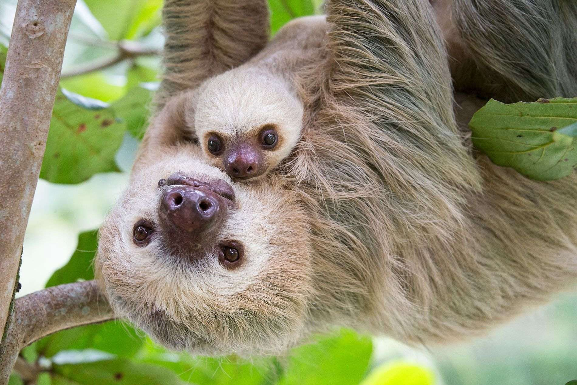 01-cute-sloths-sloth_tw_034450_fullcolor-1.jpg