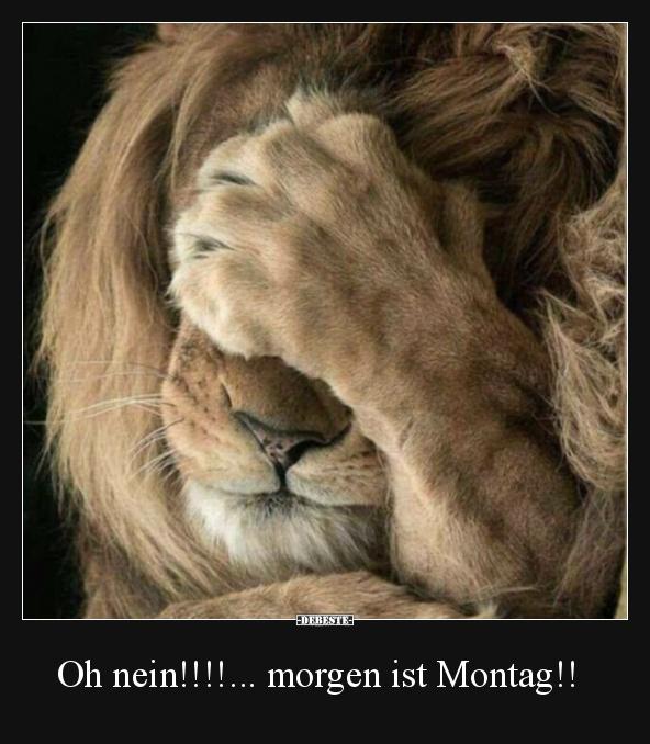 oh_nein__morgen_montag.jpg