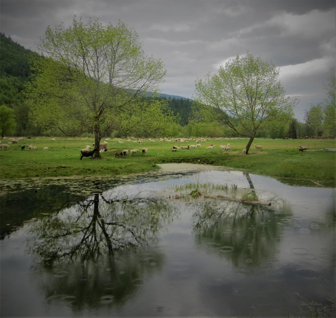 farm_kanada_im_juni.jpg