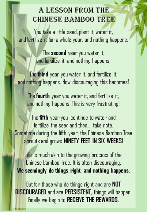 a_lesson_from_the_chinese_bamboo_tree.jpg
