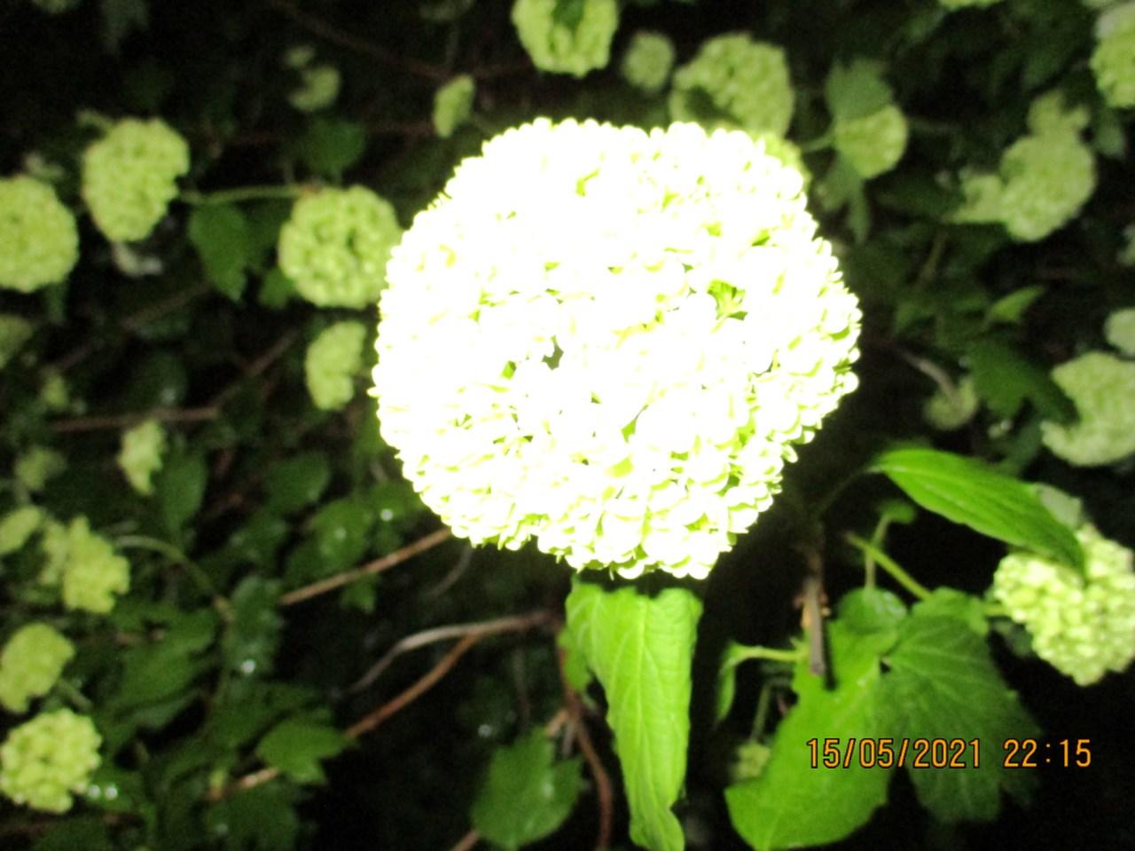 bild_2021-05-15_224301_easy-resize.jpg