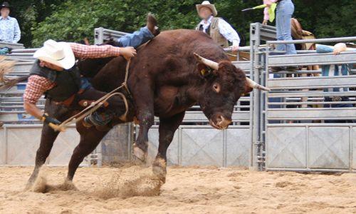 csm_rodeo_bullen_8533e903b6.jpg