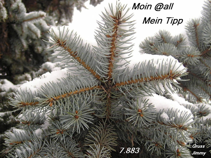 snow_covered_branches_2c_conifer_tree--x.jpg