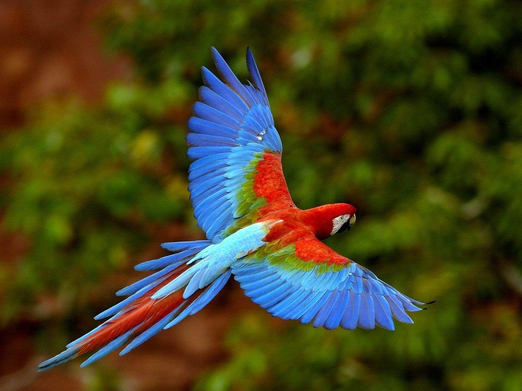 parrot_8345_1024_768.jpg
