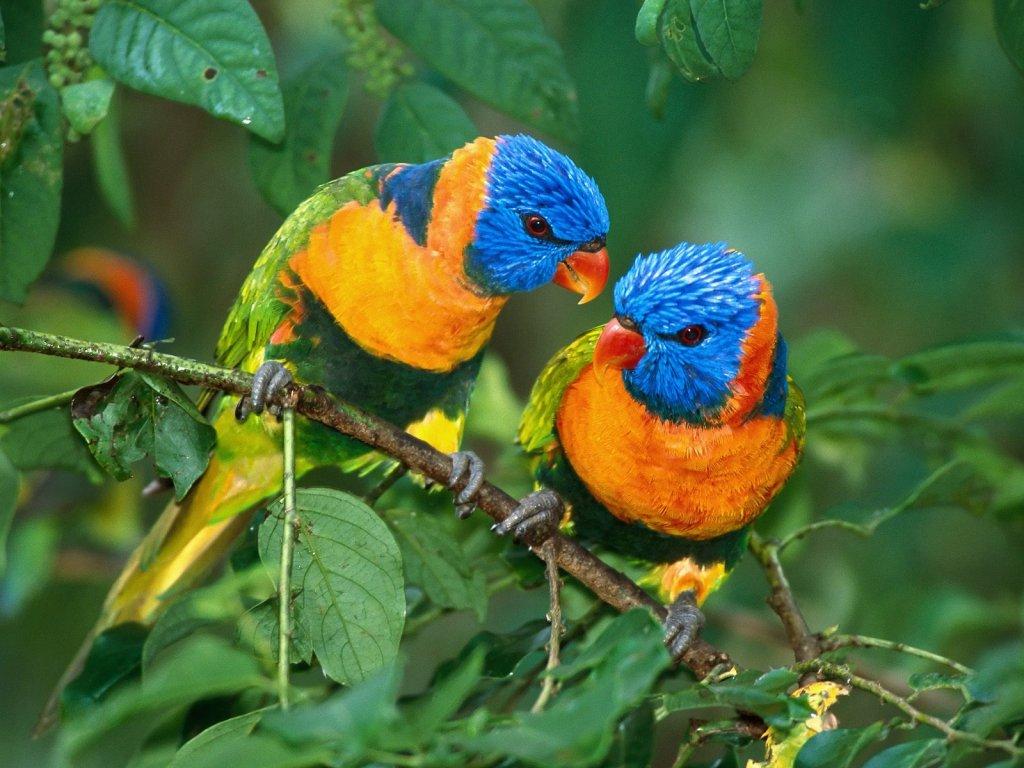 parrot_8306_1024_768.jpg