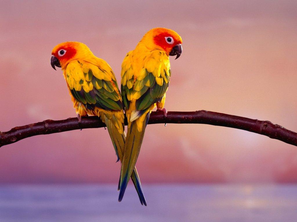 parrot_8229_1024_768.jpg