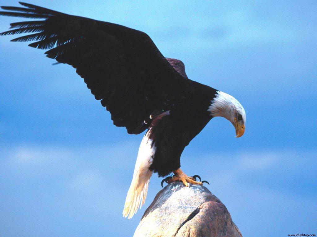 the_messenger_blad_eagle_7242_1024_768.jpg