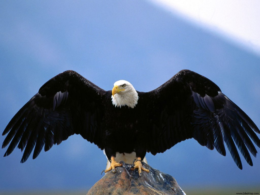 wingspan_blad_eagle_7128_1024_768.jpg