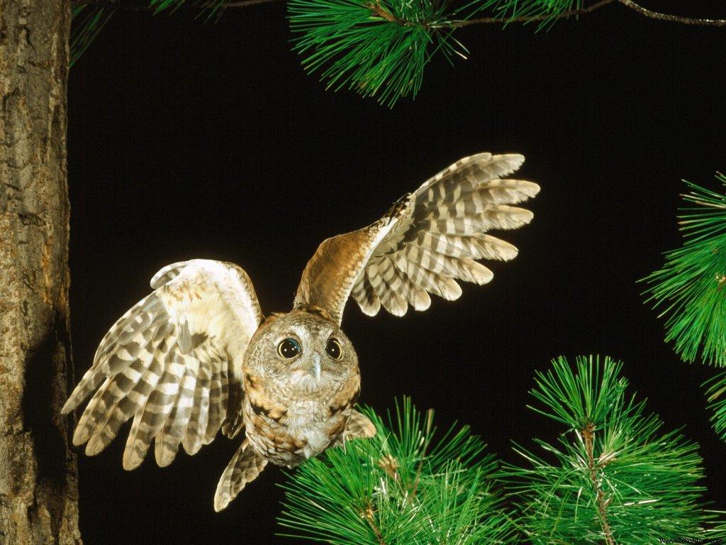 owl_6474_1024_768.jpg