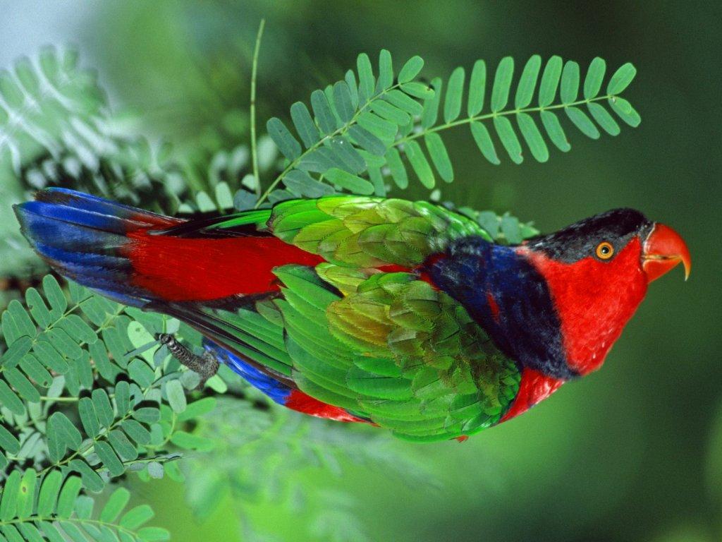 parrot_8196_1024_768.jpg