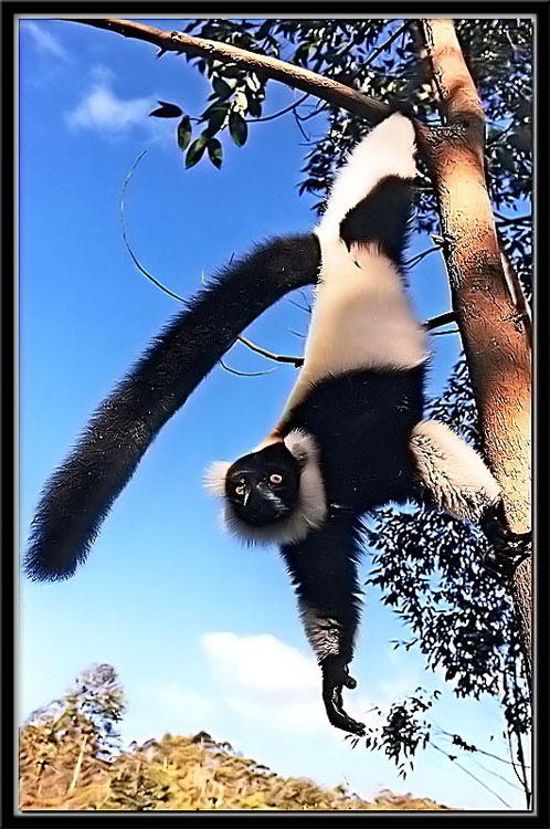 lemuren_13.jpg