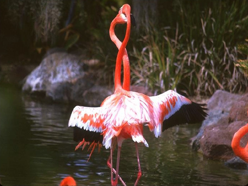 flamingos-007.jpg