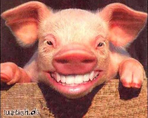 lachschwein.jpg