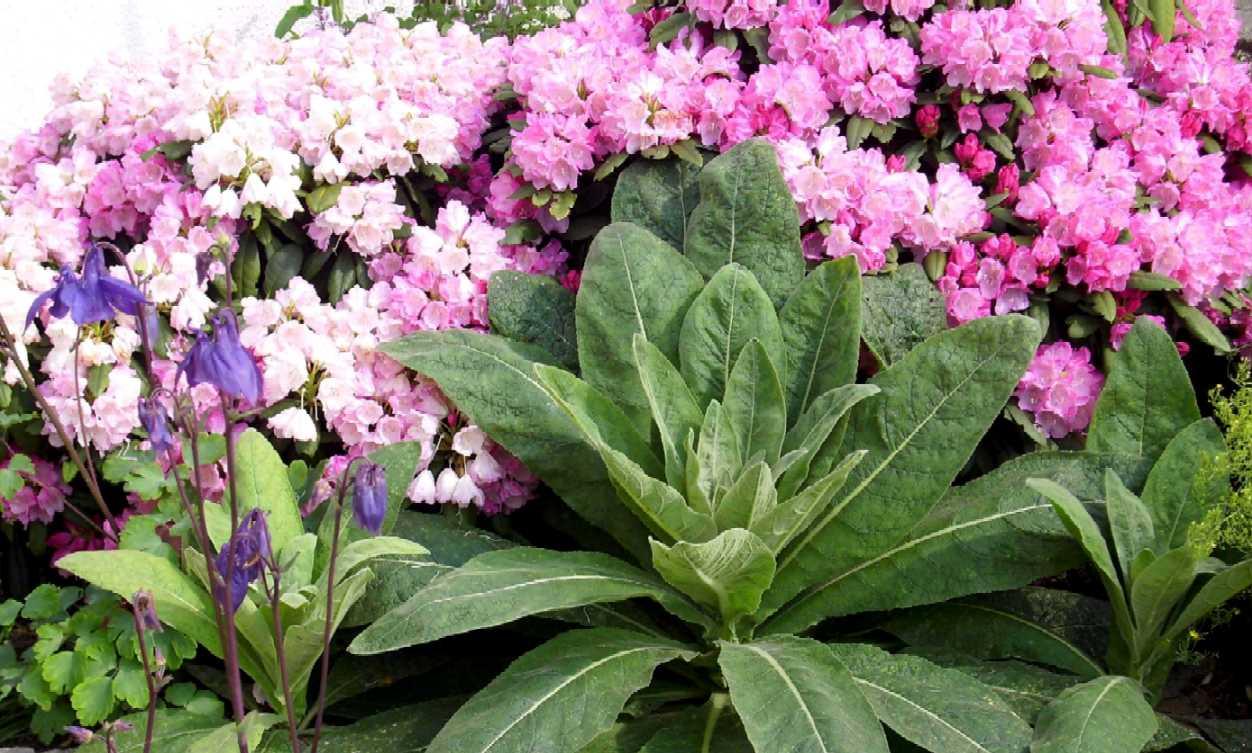 wetterkerze_mit_rhododendron.jpg