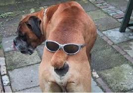 boxermitbrille.jpg