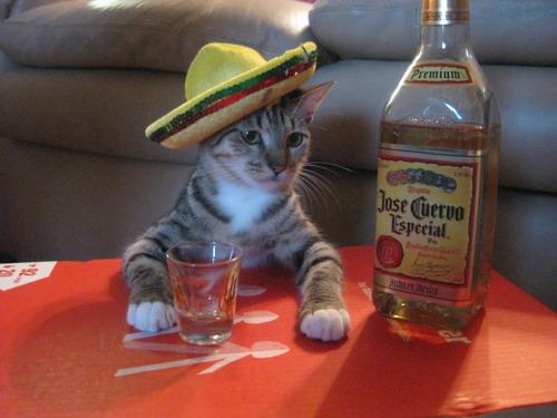 cat-tequila.jpg