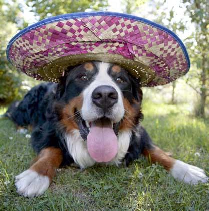 Sombrero_für_den_Amigo.jpg
