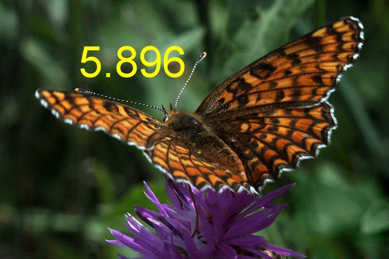 metulj2.JPG