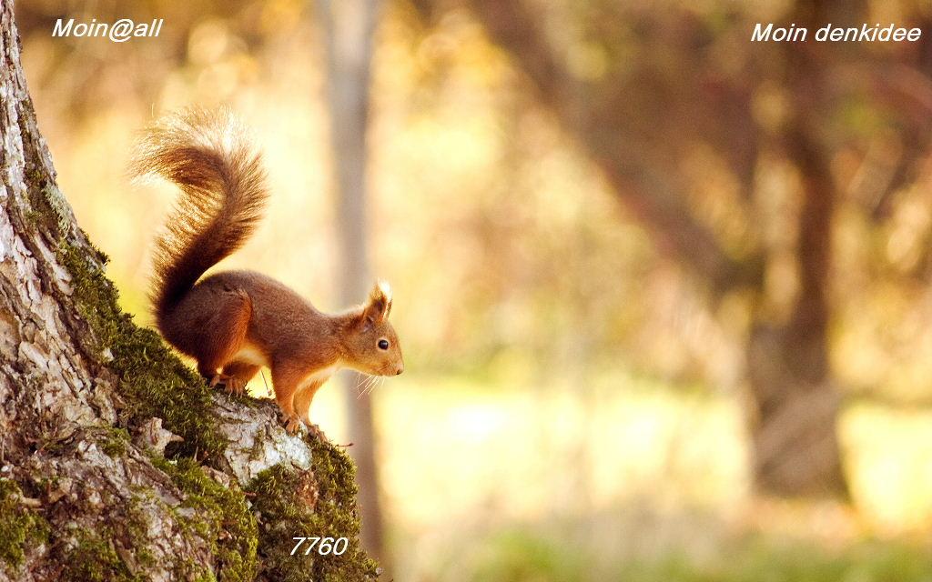 squirrel-wide-.jpg