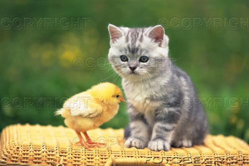 Katze_9.jpg