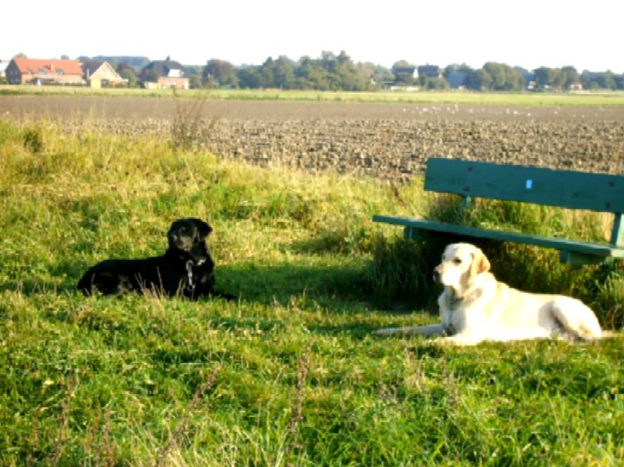 Dogs1.jpg