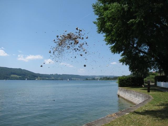 fliegende_steine.jpg
