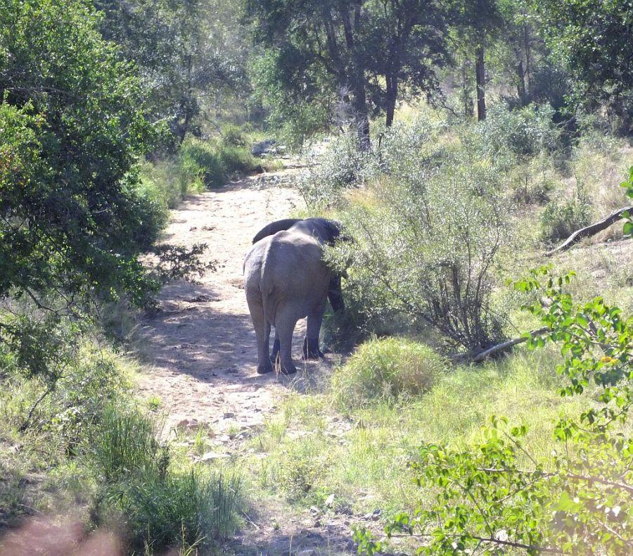 elefant_geht.jpg