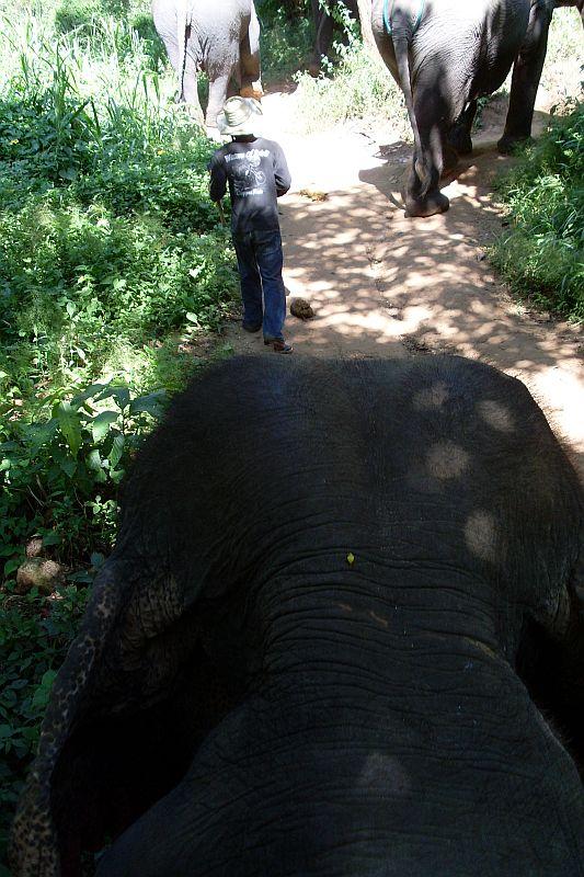 elefantenritt.jpg