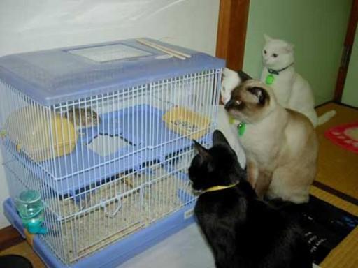 katzenfutter.jpg