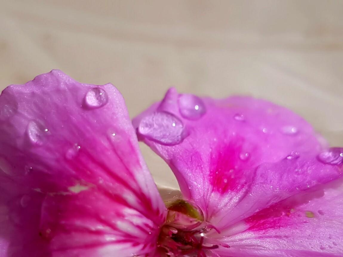 juniregen.jpg