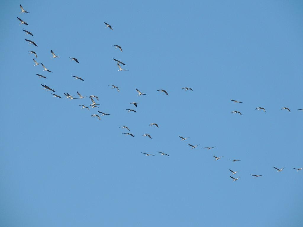 vogel-54.jpg