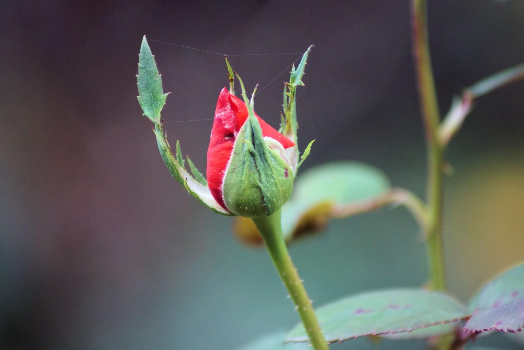 rose_2019.jpg