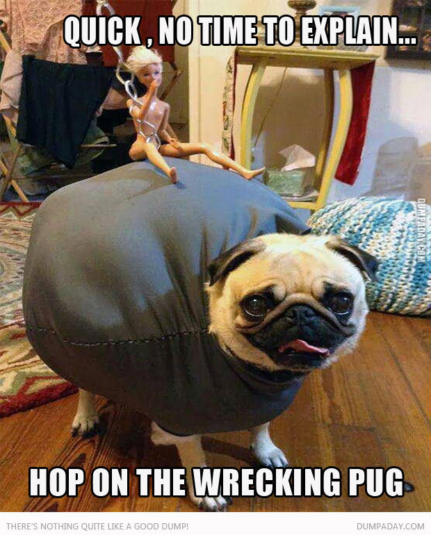 wrecking-pug-no-time-to-explain2.jpg