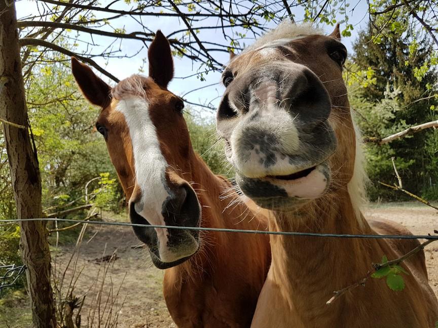 pferde.jpg