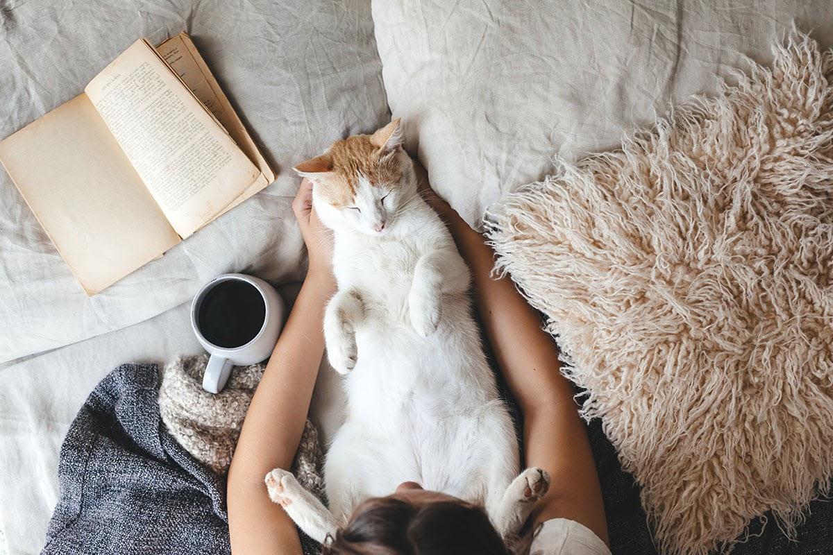 hygge-cat.jpg