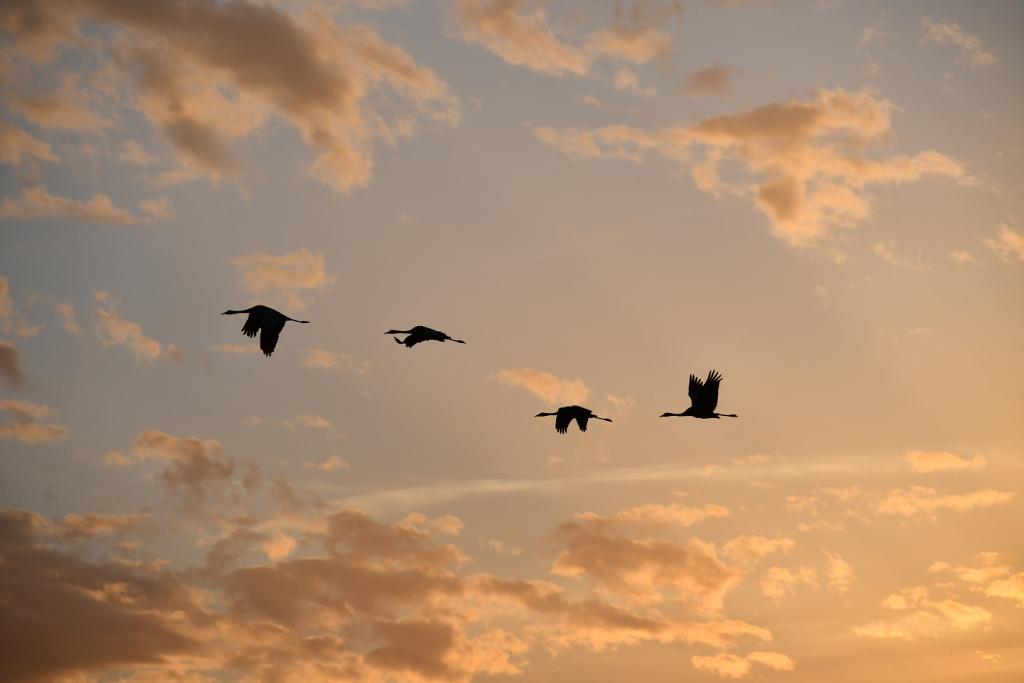 vogel-97.jpg