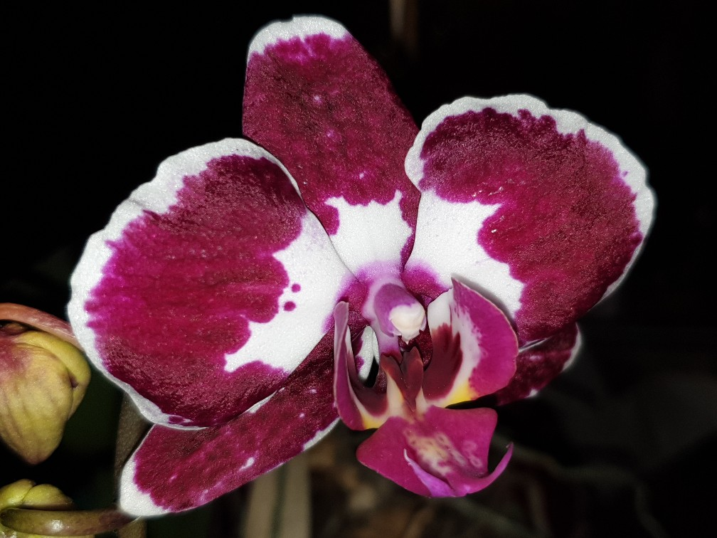 orchidee_2_jan_2021.jpg
